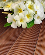Teak Prints - Bouquet of plumeria flowers  Print by Buchachon Petthanya