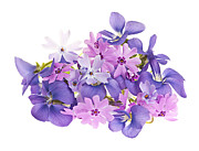 Violet Photo Metal Prints - Bouquet of spring flowers Metal Print by Elena Elisseeva