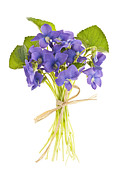 Tied Metal Prints - Bouquet of violets Metal Print by Elena Elisseeva