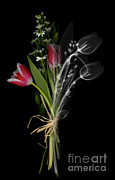 Ray Flowers Framed Prints - Bouquet, X-ray Framed Print by Ted Kinsman