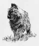 Pup Drawings Framed Prints - Bouvier Pup Framed Print by Patrice Clarkson