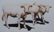 Cows Mixed Media - Bovine Triumvirate by Constance Drescher