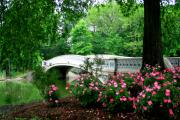 Central Park Photos - Bow Bridge in Springtime by Christopher Kirby
