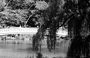 Bow Bridge Prints - BOW BRIDGE thru the TREES Print by Rob Hans