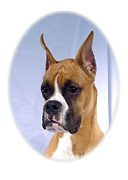 Boxer 07 Print by Larry Matthews