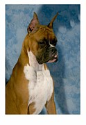 Boxer Digital Art Metal Prints - Boxer 151 Metal Print by Larry Matthews
