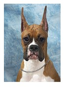 Boxer Digital Art Metal Prints - Boxer 155 Metal Print by Larry Matthews