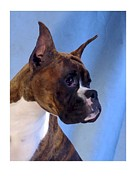 Boxer Digital Art Metal Prints - Boxer 59 Metal Print by Larry Matthews