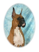 Boxer Digital Art Metal Prints - Boxer 795 Metal Print by Larry Matthews