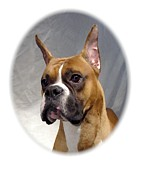 Boxer Digital Art Metal Prints - Boxer 82 Metal Print by Larry Matthews