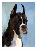 Boxer Digital Art Metal Prints - Boxer 890 Metal Print by Larry Matthews