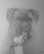 Boxer Dog Drawings Prints - Boxer Buddy Print by Rick Yanke
