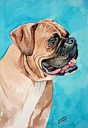 Boxer Puppy Painting Framed Prints - Boxer Framed Print by Christopher Shellhammer