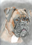 Boxer Dog Drawings Prints - Boxer Print by Don  Gallacher