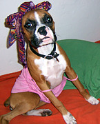 Cute Dogs Pastels - Boxer Girl by Tisha McGee