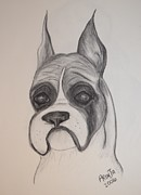 Boxer Drawings Framed Prints - Boxer Framed Print by Maria Urso