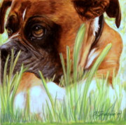 Best Friend Pastels Framed Prints - Boxer  Framed Print by Patricia L Davidson