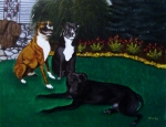 Pitbull Art - Boxer Pitbull Mix by Amanda Schambon