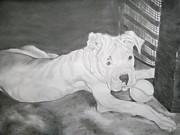 Boxer Pup Print by Danielle Shepard