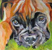 Boxer Puppy Painting Framed Prints - Boxer Pup Framed Print by Debora Cardaci