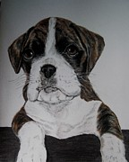 Boxer Drawings Framed Prints - Boxer Pup Framed Print by Joan Pye