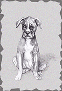 Boxer Mixed Media Metal Prints - Boxer Pup Metal Print by Peggy Wilson