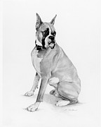 Boxer Drawings Framed Prints - Boxer Seated Framed Print by Phyllis Tarlow
