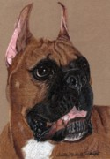 Boxer Drawings - Boxer Vignette by Anita Putman