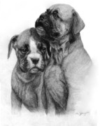 Boxer Drawings - Boxers by Danguole Serstinskaja
