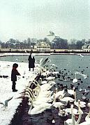 Christmas Greeting Prints - Boy Feeding Swans- Germany Print by Nancy Mueller