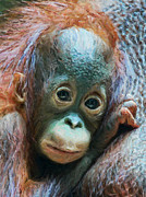 Orangutan Digital Art Metal Prints - Boy of the Forest Metal Print by Wade Aiken