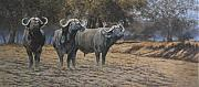 Cape Buffalo Paintings - Boys from Mana Pools by Paul Apps