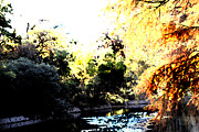 Texas Drawings - Brackenridge Park Collection III by Diana Gonzalez
