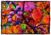 Morning Mist Images Framed Prints - Bradford Pear in Autumn Framed Print by Judi Bagwell