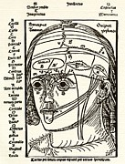 Sense Prints - Brain Anatomy, 16th Century Diagram Print by Sheila Terry