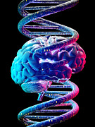 Deoxyribonucleic Acid Photos - Brain And Dna by Laguna Design