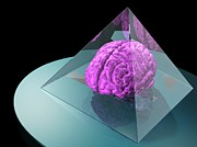 Human Brain Art - Brain Trapped In A Pyramid, Artwork by Laguna Design
