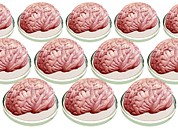 Brains Photos - Brains In Petri Dishes, Conceptual Image by Victor De Schwanberg