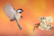 Backyard Birds In Flight Framed Prints - Braking For The Rose Hip Framed Print by Gerry Sibell
