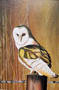Usha Rai Framed Prints - Bran owl Framed Print by Usha Rai