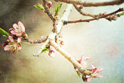 Peach Prints - Branch Delights Print by Andrea Hazel Ihlefeld