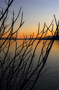 Silhouette Art - Branches In The Sunset by Joana Kruse