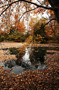Fall Photos Prints - Branches Over the Water Print by John Rizzuto