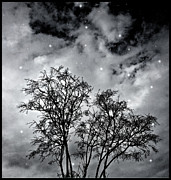 Decorative Trees Pyrography Prints - Branches to Heaven Print by Daniel Ferreira-Leites