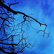 Scary Art - #branches #tree #evening #nature #scary by Christine Cherry