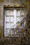 Moss Green Prints - Branchy Window Print by Carlos Caetano