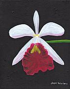 Orchid Paintings - Brassalove Nodosa-Rosita by Jose Valeriano