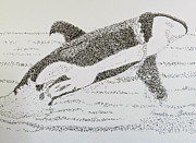 Orca Paintings - Breaching Orca by Pamela  Meredith