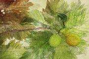 Tropical Mixed Media Framed Prints - Breadfruit Framed Print by Kaypee Soh - Printscapes
