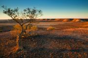 Desert Metal Prints - Breakaway Dawn Metal Print by Mike  Dawson